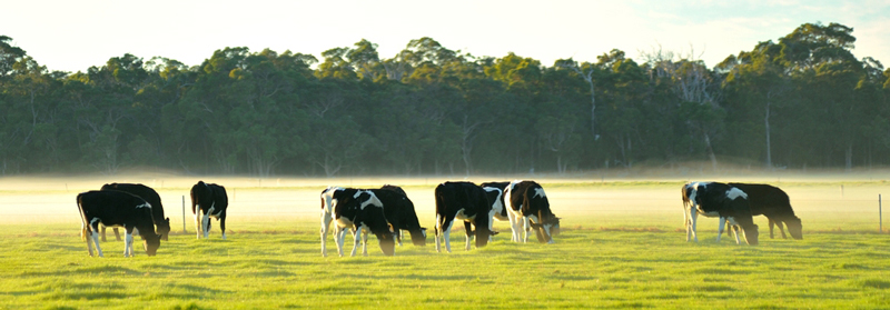 Herd Health Management Course October 2019