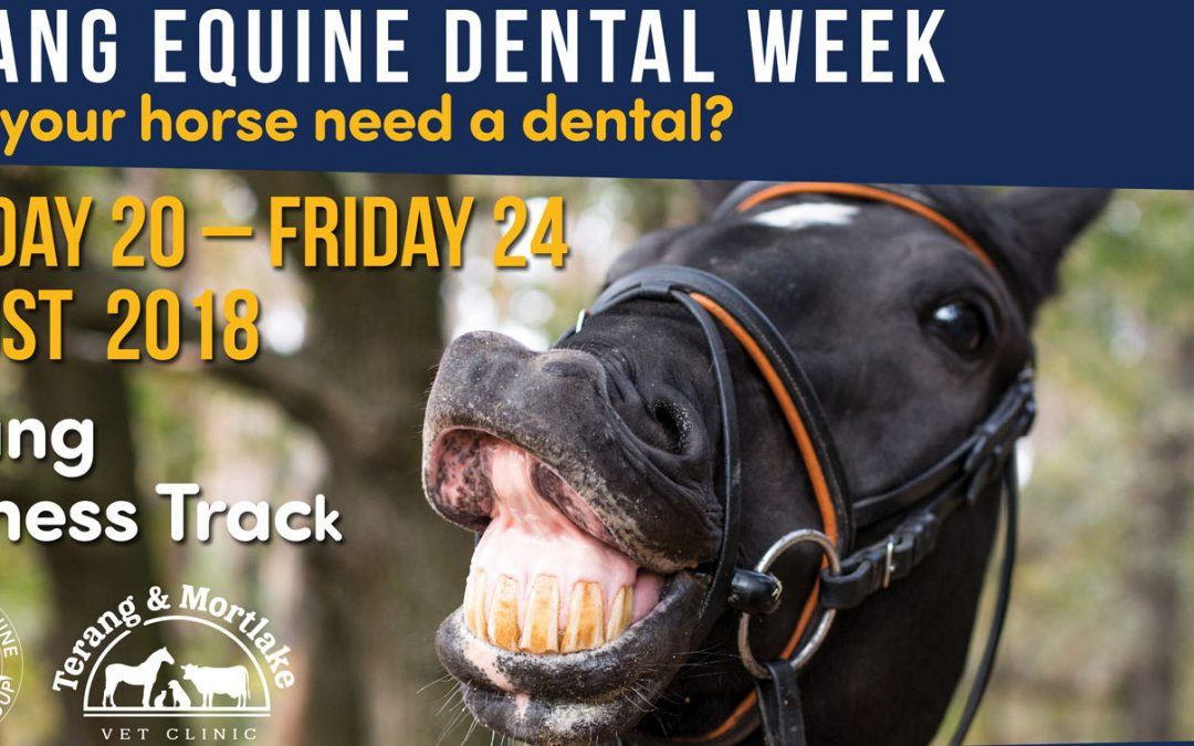 Terang Equine Dental Week